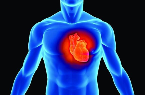 心脏从不得癌症吗?