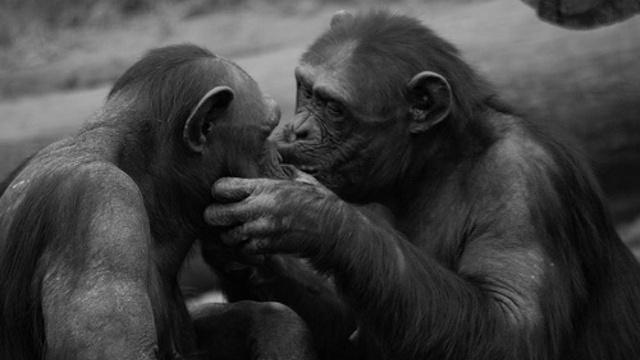 年《人类和动物的情绪表达
