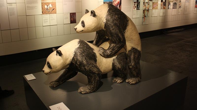 但在动物园里,它们远离种群,没有机会习得繁衍物种的概念.