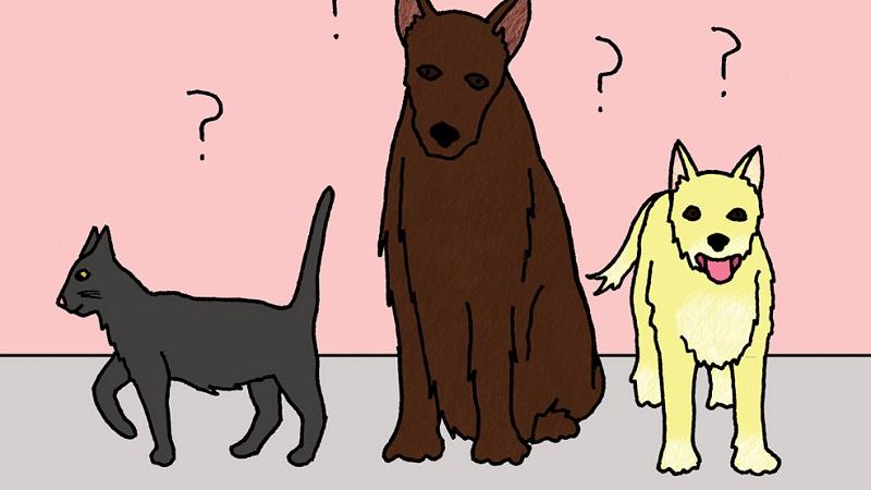 根据动物行为可以预测地震吗?的头图