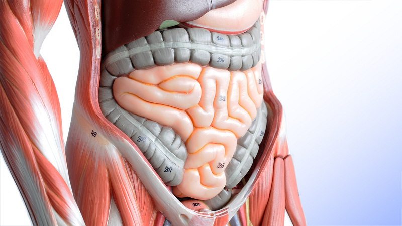 肠道里的违章建筑