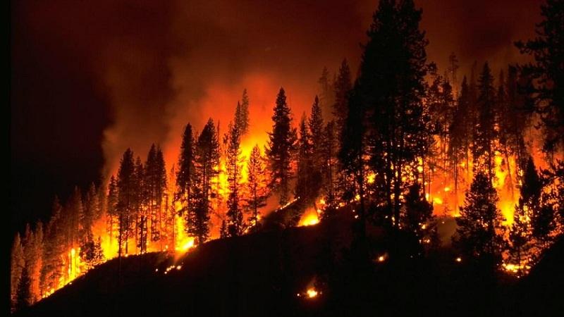 不是所有的森林火灾都需要扑灭