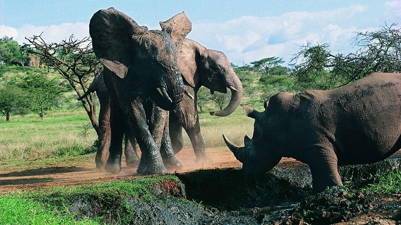 """大象""""强奸""""并杀死犀牛是怎么回事?"""