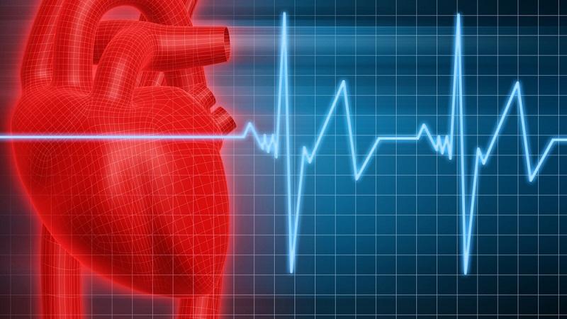 玩的就是心跳:心率快慢和寿命有关吗?