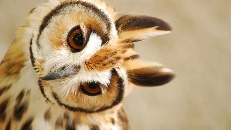 那些被童话了的动物:萌图不萌?的头图