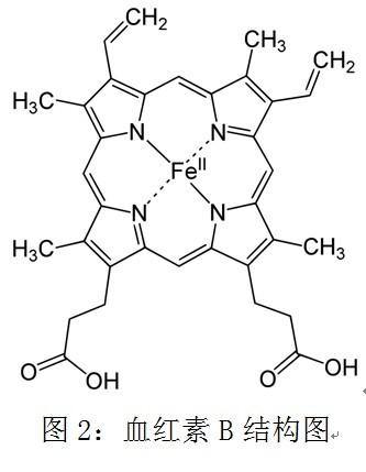 亚铁离子可以被位于十二指肠上皮细胞上的二价金属